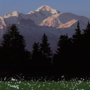 Mont Blanc Flowers Foreground
